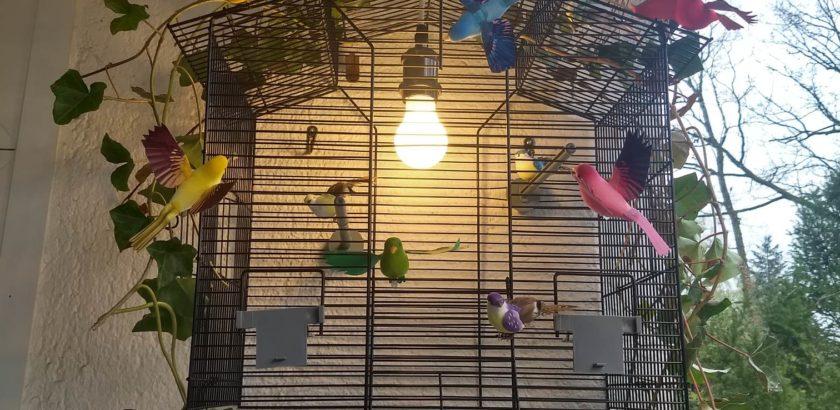 cage allumée